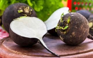 Применение черной редьки при лечении бронхита: эффективность и рецепты