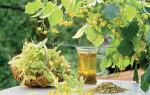 Как вылечить простуду лекарственными травами — эффективные народные рецепты