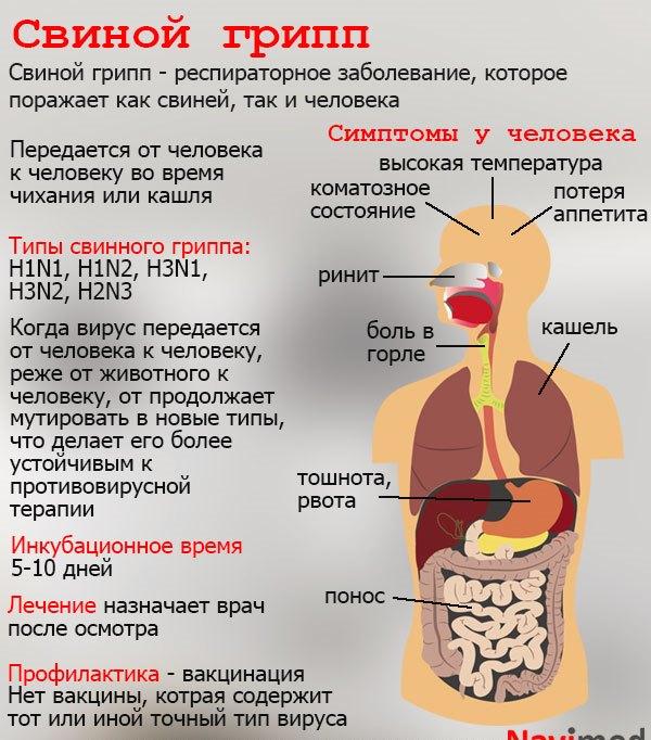 Что такое свиной грипп