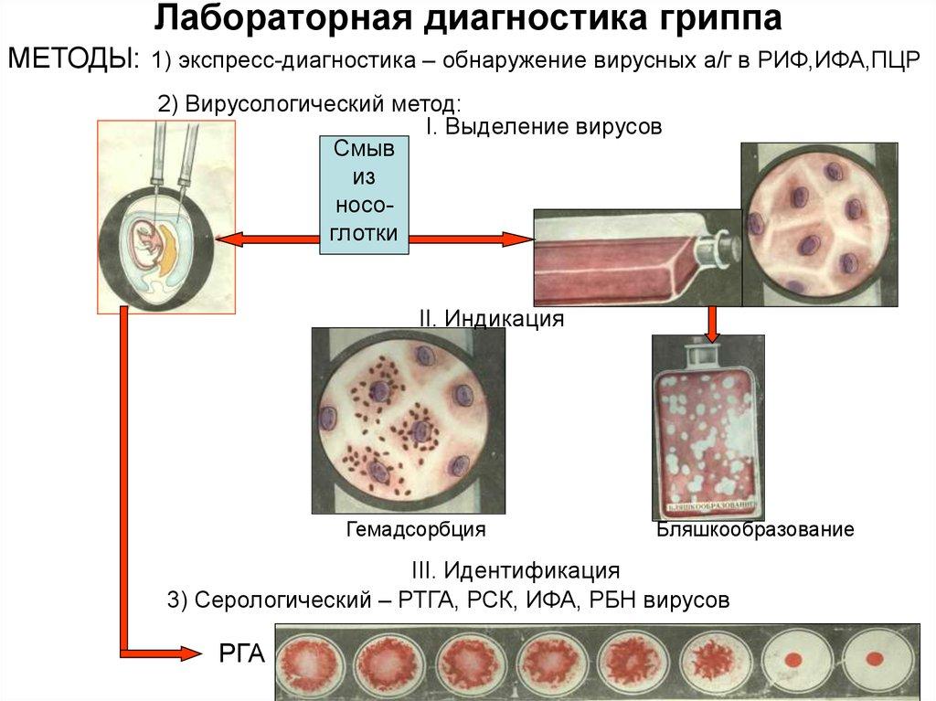 Лабораторная диагностика гриппа