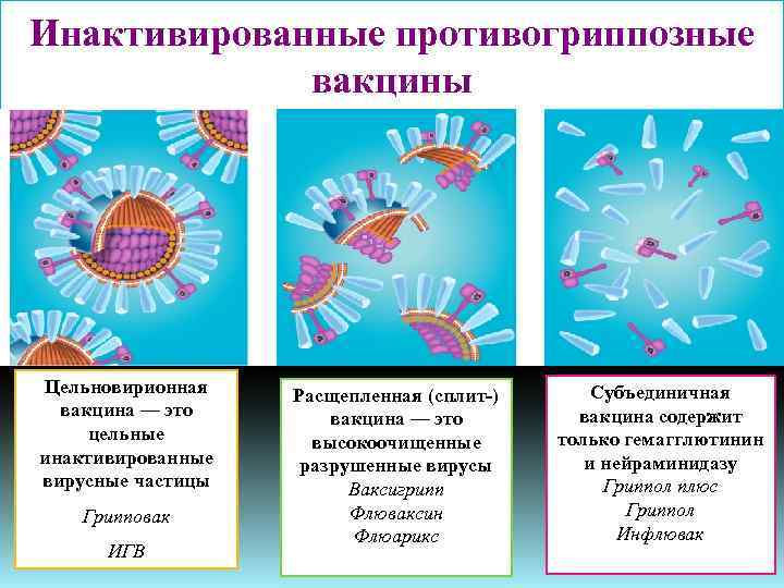 цельновирионная вакцина