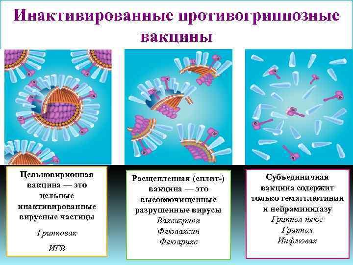 Правила проведения вакцинации у взрослых от гриппа thumbnail