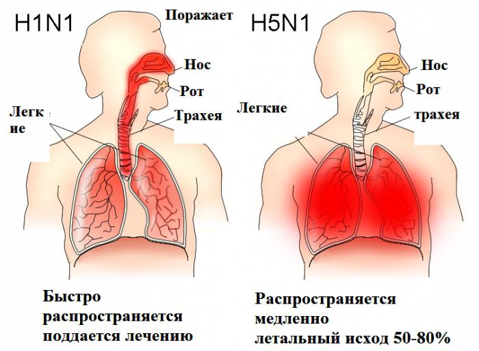 опасность птичьего гриппа