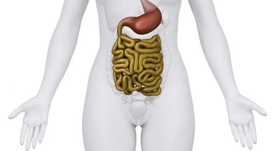 желудочно кишечный тракт